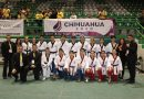 Imponente Chihuahua en Regional Conade de Taekwondo